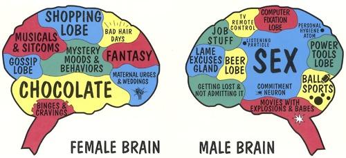female-brain-male-brain